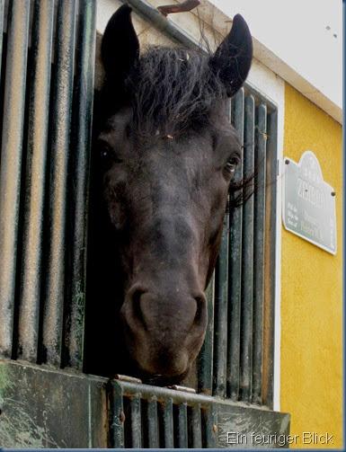 Menorca 2014 068