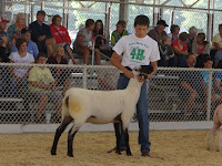 Jonah Van Roekel of the Kalona Klassics, son of Marty and Marianne Van Roekel of Wellman showed the Champion Other Meat Breeds Ewe in the 4-H Sheep Show.  It was an Oxford Ewe.  Photo courtesy:  Washington County Extension.