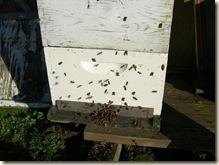 bees seeking the sun