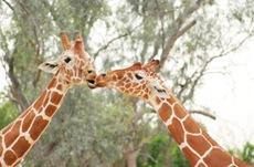zoo-date