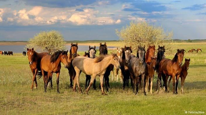 """""""das Leben ist kein Ponyhof"""""""