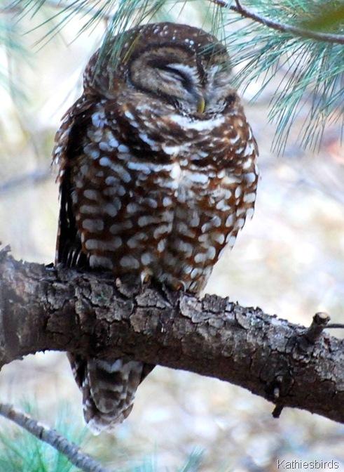 3. owl-kab