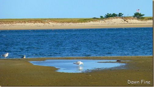 tern island birding_046