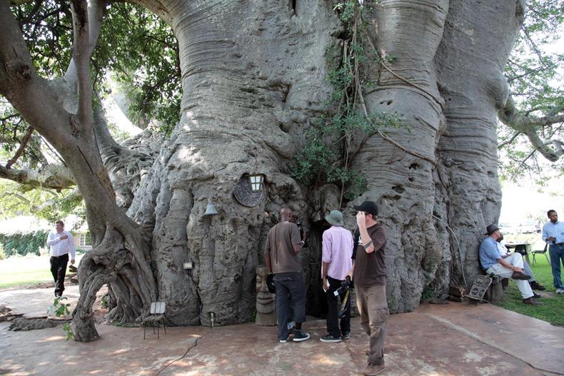 sunland-baobab-7