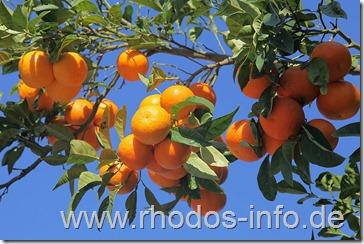 mandarinen01