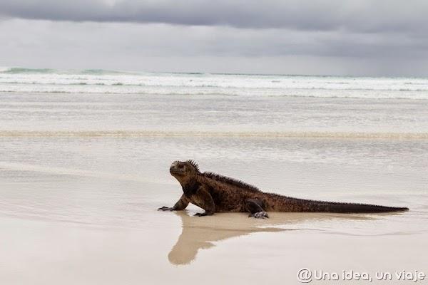 viajar-islas-galapagos-actividades-gratuitas-gratis-baratas-santa-cruz-unaideaunviaje-8.jpg