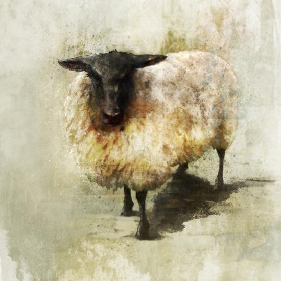 Sheep ken roko