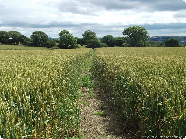 path through crops co durham