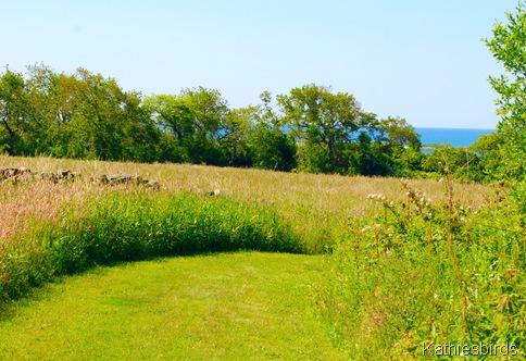 16. ocean beyond the meadow-kab
