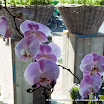 20080607_Flowers_0057.jpg