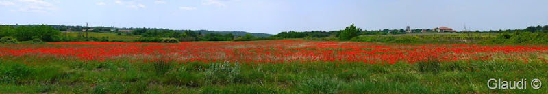 Panorama_coquelicot provence
