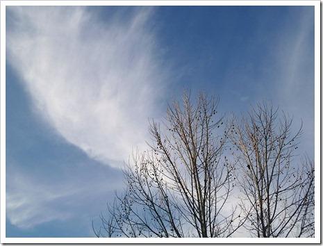 111231_tree_silhouette_12