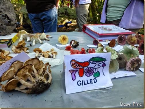 Mushroom festival_107