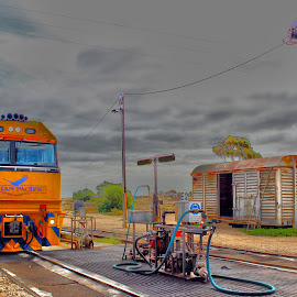 Indian Pacific at Cook South Australia by Jason Kryger - Transportation Trains ( cook, southern, great, australia, rail, south, pacific, indian )