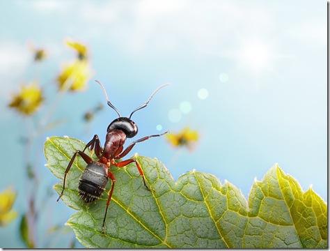 foto macro insecte