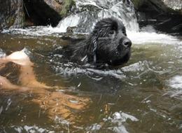 Dogs Trekking 4 (345_1) (8)