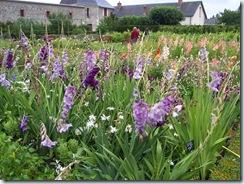 2011.07.25-034 jardin potager
