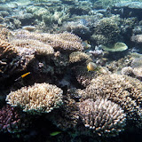 Many Different Fish Swimming in the Reef - Noumea, New Caledonia