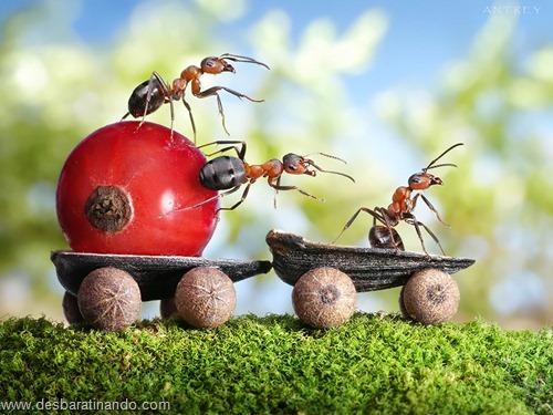 formigas inacreditaveis incriveis desbaratinando  (52)