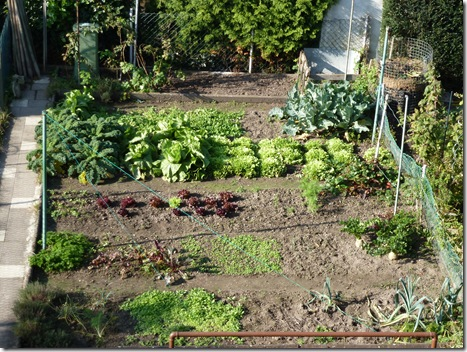 Having been raised on German fairytales by the Brothers Grimm, living in an attic in Europe seems like a dream come true to an Australian used to wide horizons and Christmas in the middle of summer. Here below my attic window is the only working vegetable garden in all these rows of houses, in the backyard of Opa and Oma, who've passed their thrifty ways along to their daughter and Australian son-in-law.