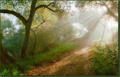 BRIGHT MORNING_on_the_forest_paths