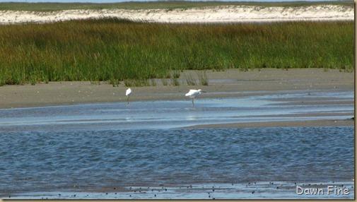 birding south beach_048