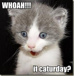 whoah-it-caturday[3]