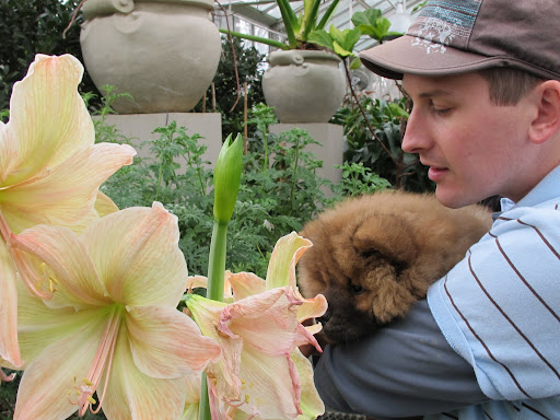 G.K. - These amazing flowers are called amaryllis Exotica and Martha really adores all kinds of amaryllis.  This would be a good choice if you're wondering what to give to her for Valentine's Day.