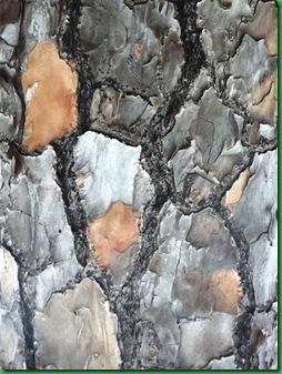 Nature's mosaic