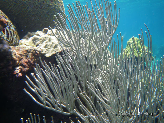 Buck Island Reef - IMGP1309.JPG