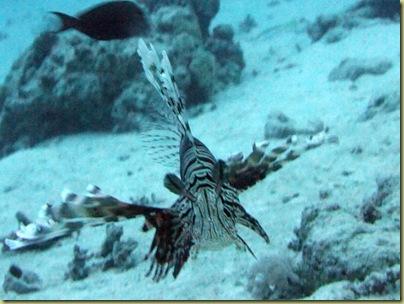 GAR Lionfish