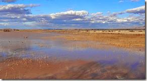 Sand Hill Cranes Wilcox AZ 082