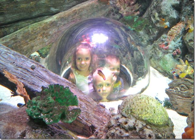 Sea Life Aquarium 102