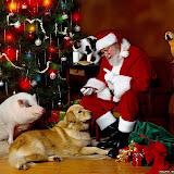 Navidad%2520Fondos%2520Wallpaper%2520%2520725.jpg