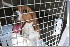 20140121_beagle