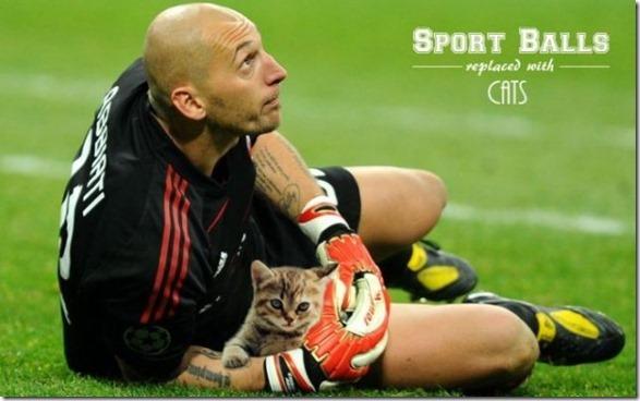 cats-sports-photoshop-10