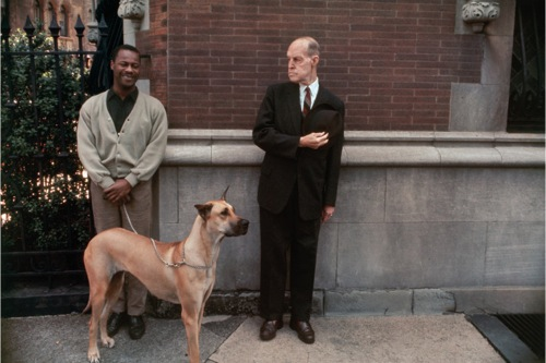 A joelmeyerowitz