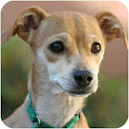 Claudette is from Tony La Russa's Animal Rescue Foundation (ARF) in Walnut Creek, California. To learn more about Claudette, click on the link to the shelter below.