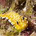 Chromodoris vibrata - Photo (c) DavidR.808, some rights reserved (CC BY-NC-SA)