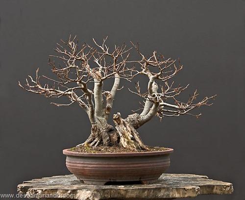 bonsais arvores em miniatura desbaratinando (34)