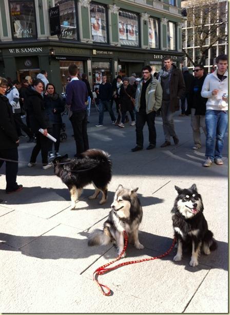 120414 Hundetur Egertorget