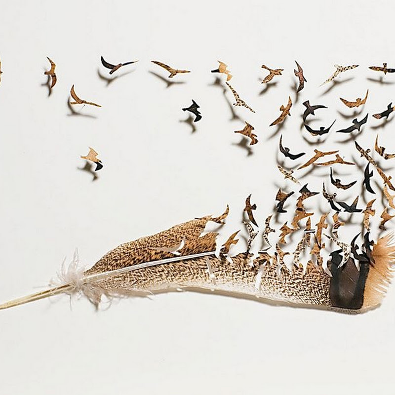 Beautiful Feather Cutwork by Chris Maynard