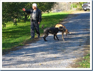 20111028_dogs_006