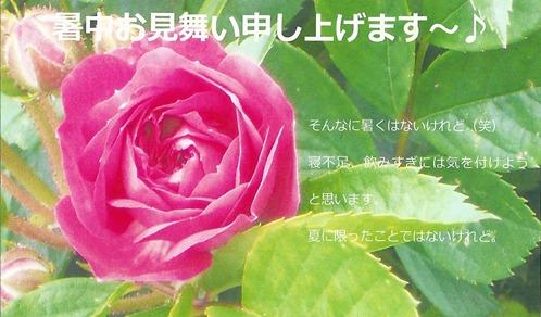 2011.7.23 暑中見舞いハガキ