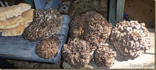 Mushroom festival_047