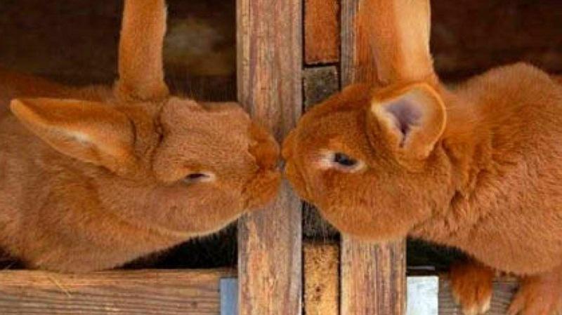 Animal Love snaps