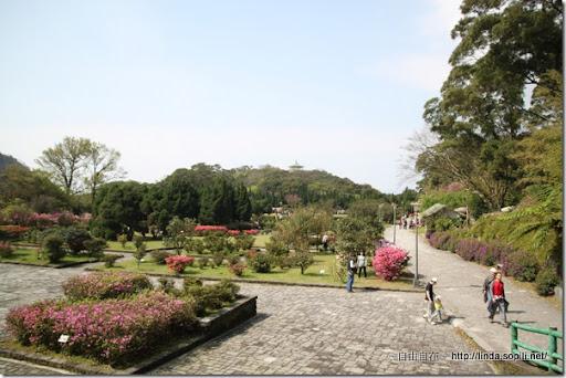 2010陽明山花季-杜鵑茶花園