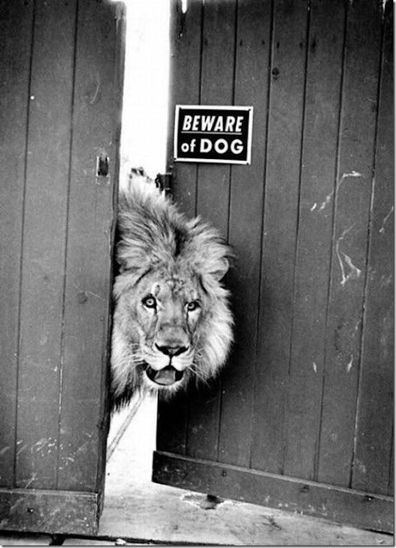 Cuidado com o cão