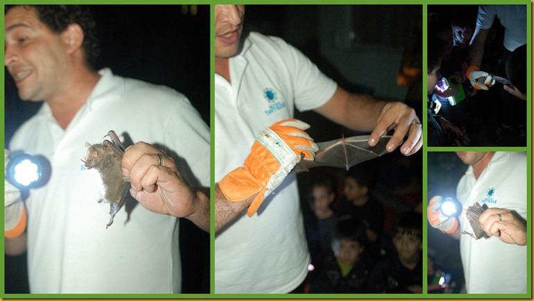Infantil 5 manhã e tarde morcegos11