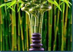 feng-shui2-lucky bamboo